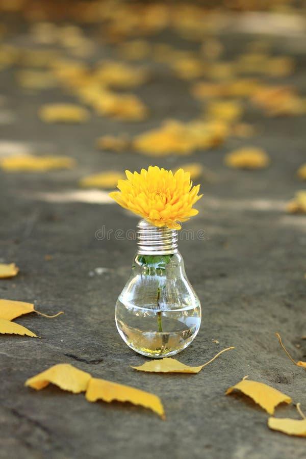 Электрическая лампочка с желтым цветком стоковые изображения