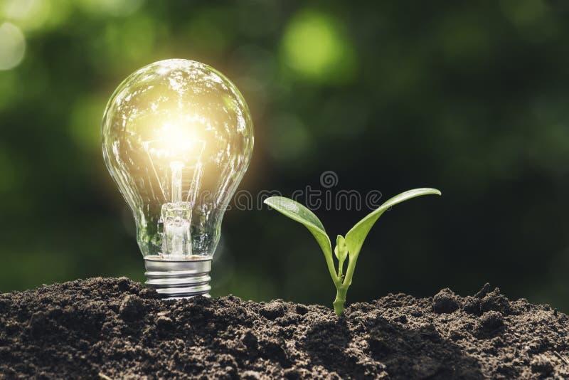 Электрическая лампочка с молодым заводом для концепции энергии положенной на почву в мягкую зеленую предпосылку природы стоковые фото