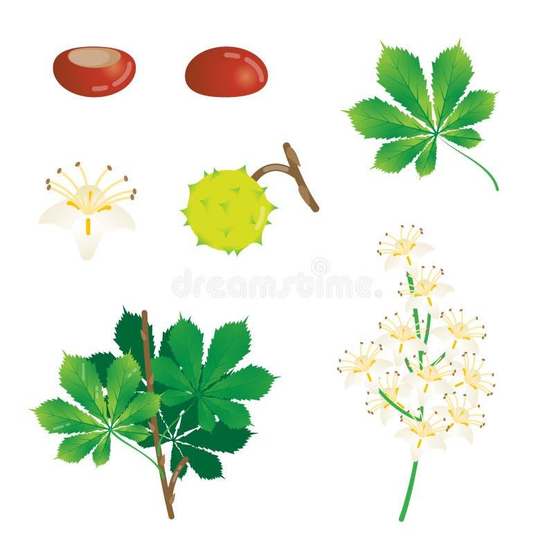 Элементы собрание, сезонные установленные объекты природы флористического дизайна, листья, каштаны и зацветая цветки иллюстрации  иллюстрация вектора