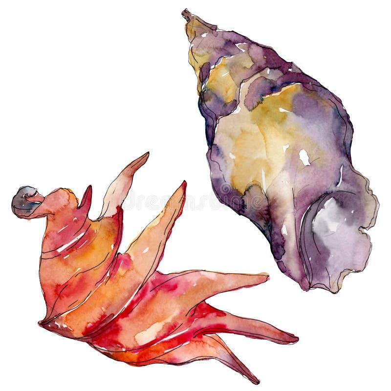 Элементы seashell пляжа лета тропические r Изолированная иллюстрация раковины иллюстрация вектора