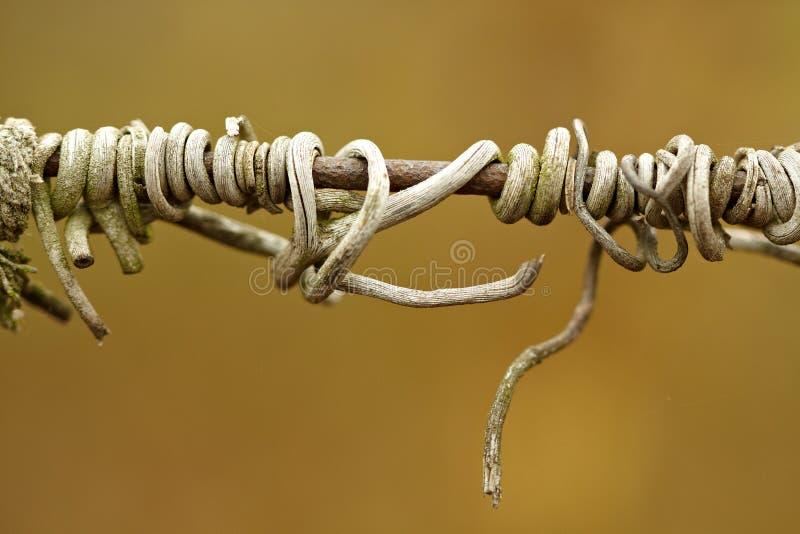 Элемент загородки металла стоковые фото