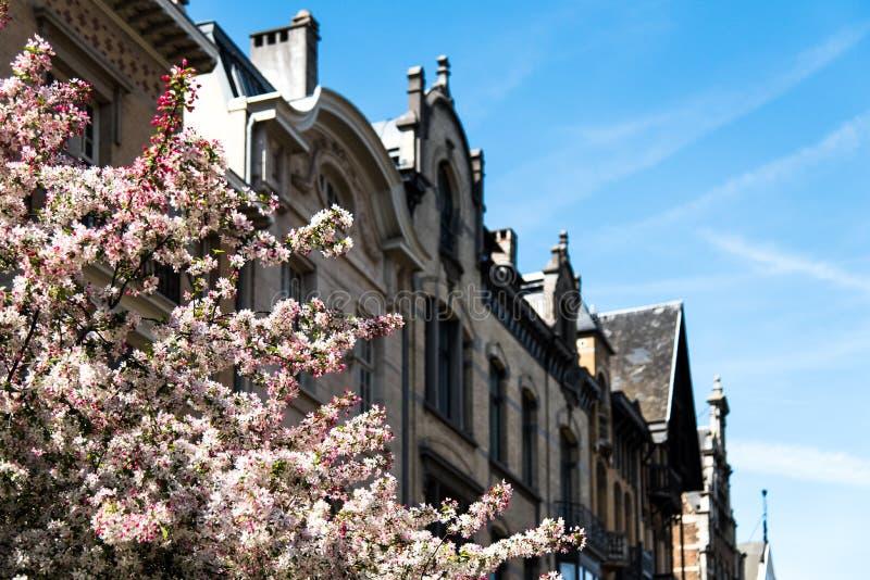 Эпоха-wijk красавицы в городе Антверпена, Бельгии стоковые изображения rf