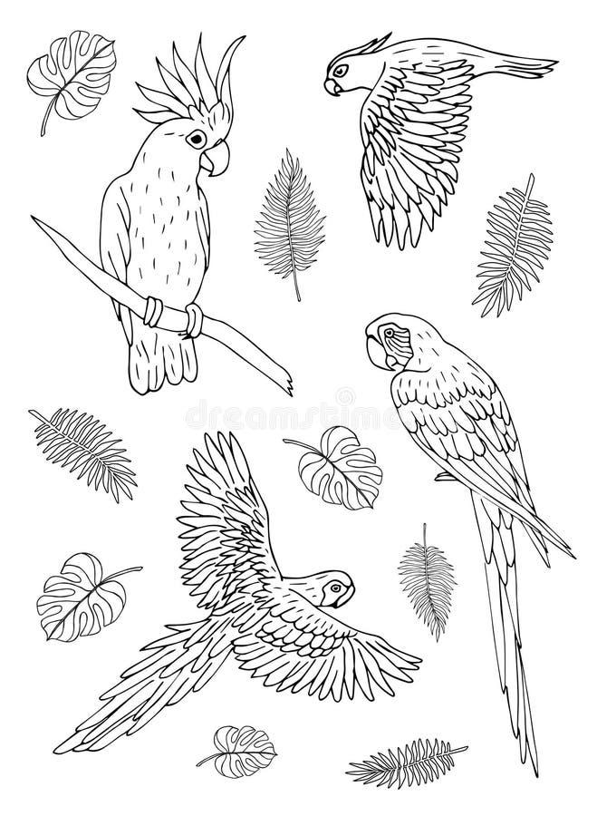 Эскиза doodle руки излишка бюджетных средств вектора собрание вычерченного установленное различных птиц попугаев на белой предпос иллюстрация вектора