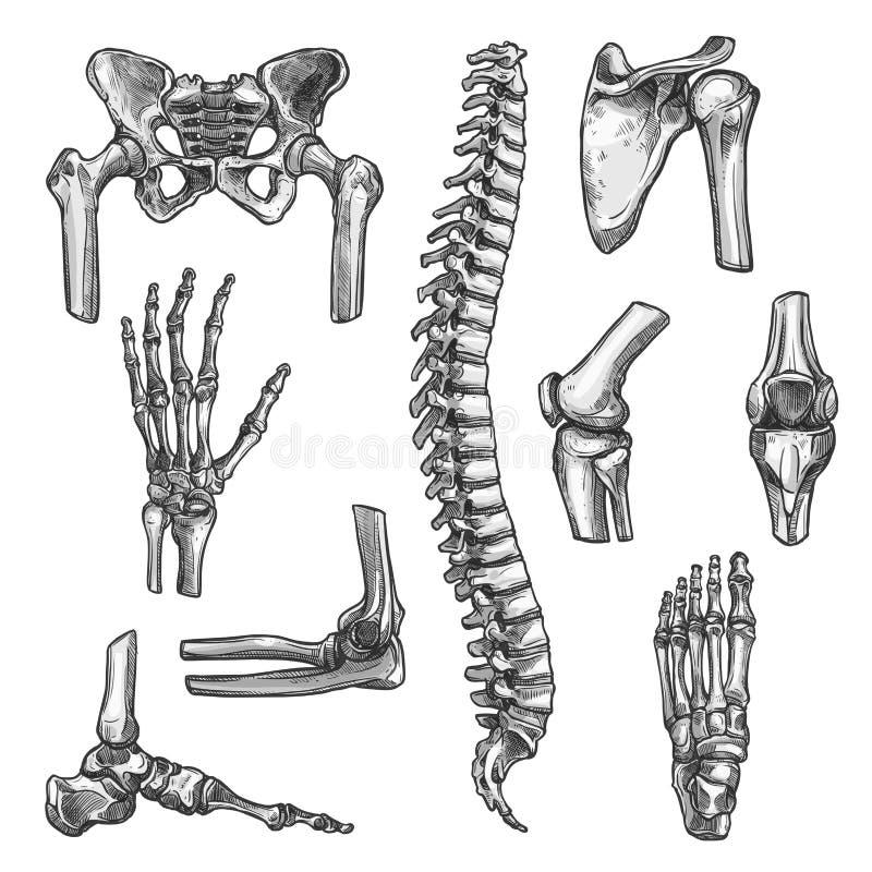 Эскизы косточки и соединения установленные для медицины конструируют иллюстрация штока