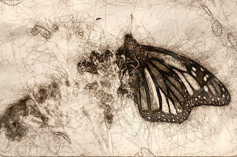 Эскиз бабочки монарха отдыхая на высушенном цветке пустыни иллюстрация штока
