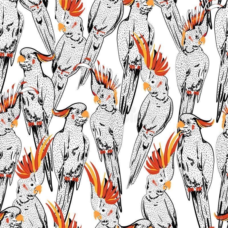 Эскиз белой руки вычерченный птиц какаду с картиной красной головы безшовной в векторе, дизайне для моды, обоев создавая программ иллюстрация штока