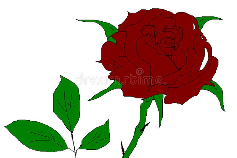Эскиз бургундской розы с самыми интересными на лепестках стоковая фотография