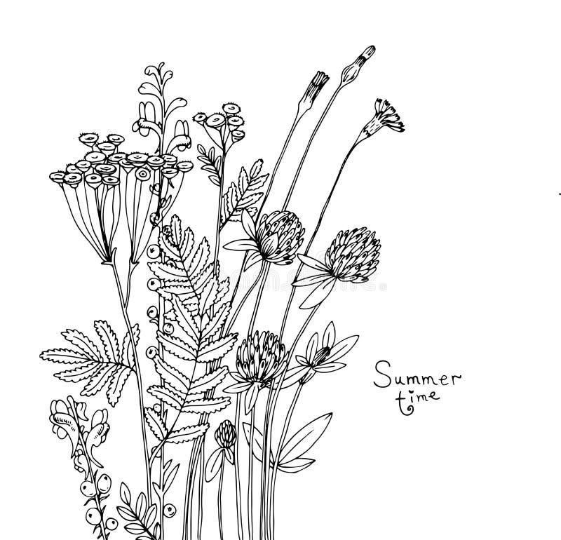 Эскиз вектора wildflowers бесплатная иллюстрация