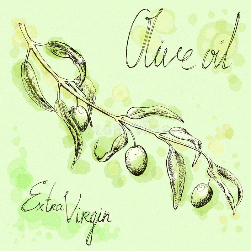 Эскиз ветви оливкового дерева, нарисованная вручную иллюстрация иллюстрация штока