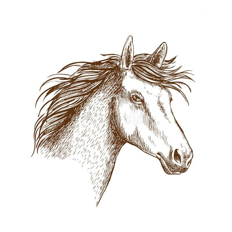 Эскиз головы лошади для equine дизайна иллюстрация вектора