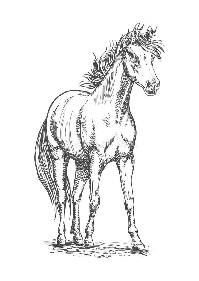 Эскиз жеребца скаковой лошади для equine дизайна спорта иллюстрация вектора