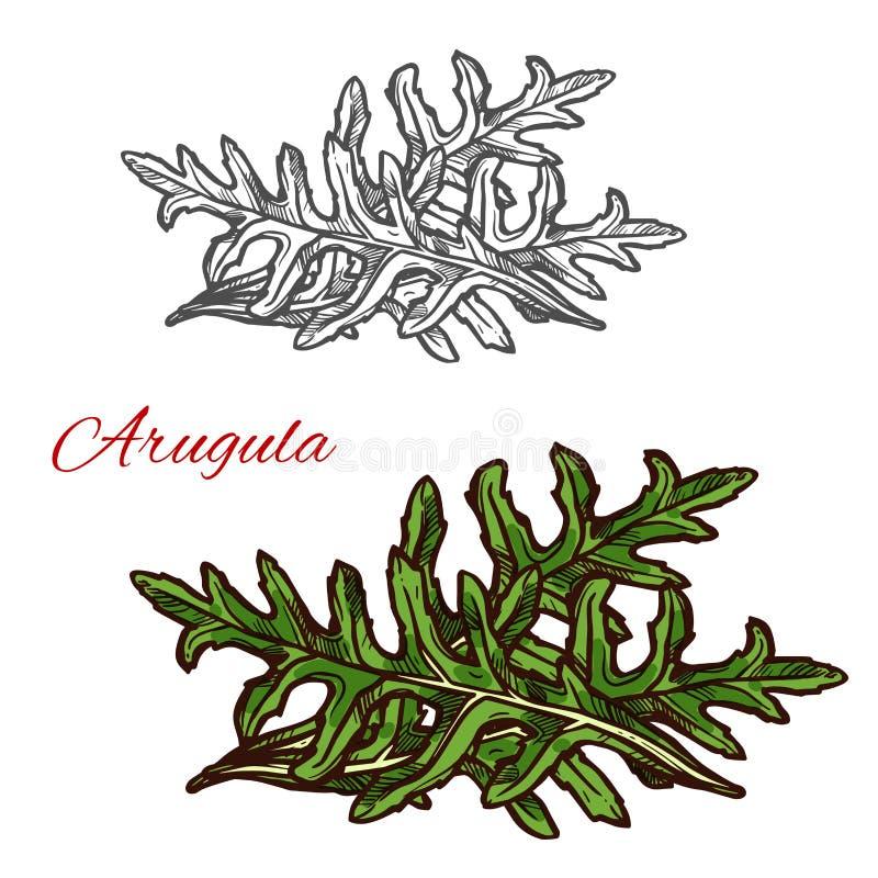 Эскиз завода Arugula зеленого овоща салата лист иллюстрация вектора
