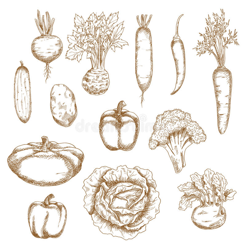 Эскиз здоровых органических значков овощей иллюстрация штока