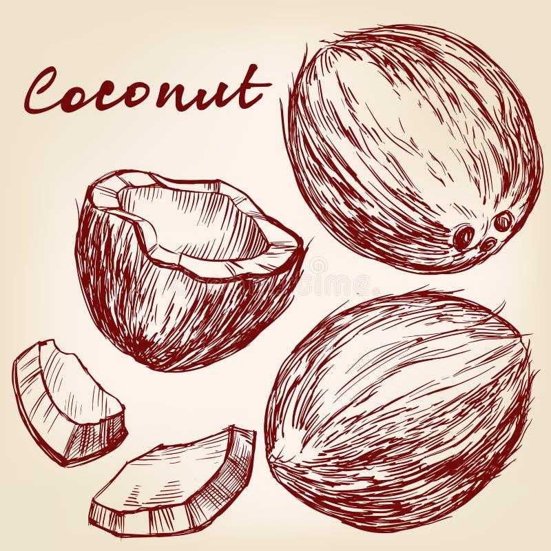 Эскиз иллюстрации вектора кокоса установленной нарисованный рукой иллюстрация вектора