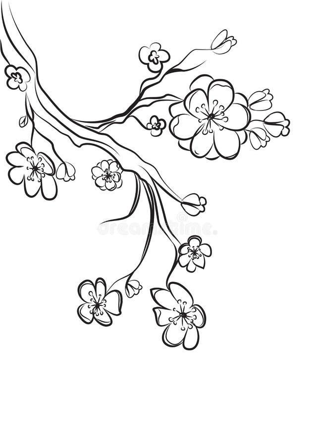 Эскиз конспекта ветви Сакуры черно-белый бесплатная иллюстрация