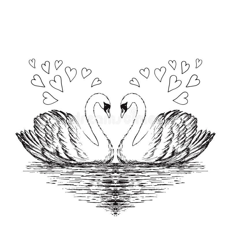 Эскиз 2 лебедей Нарисованная рукой иллюстрация вектора иллюстрация вектора