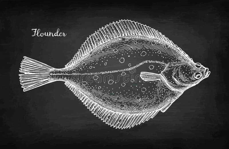 Эскиз мела flounder иллюстрация штока