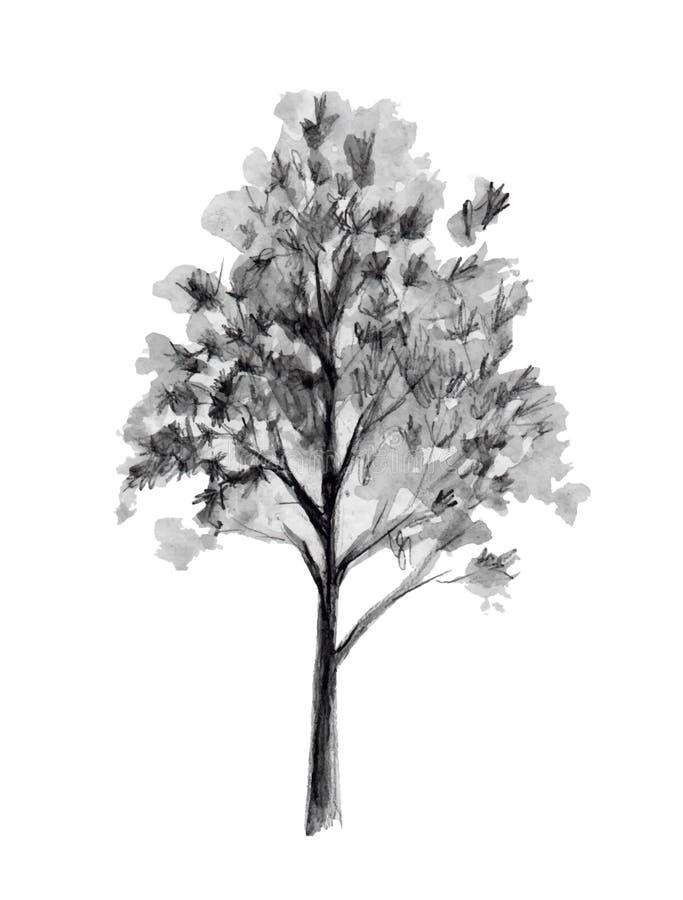 Эскиз нарисованный рукой Иллюстрация вектора вала Задний элемент изолированный на белой предпосылке стилизованное свободной руки  иллюстрация вектора