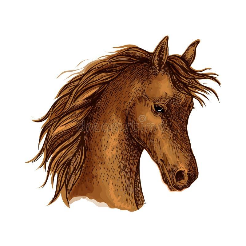 Эскиз лошади Брайна аравийский для equine дизайна спорта иллюстрация штока