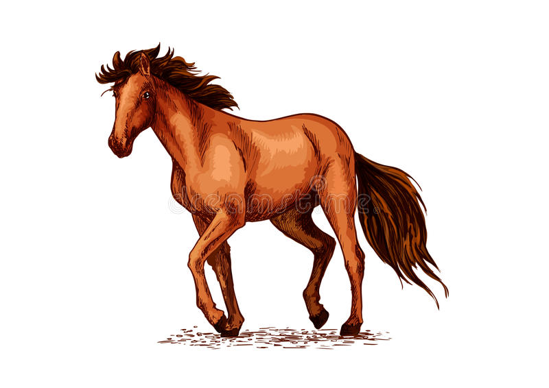 Эскиз лошади коричневого жеребца мустанга иллюстрация штока