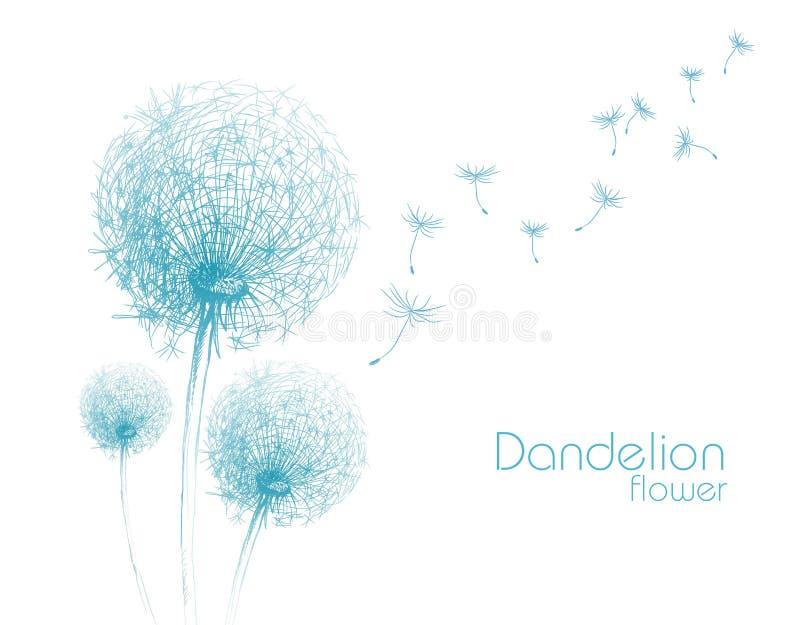 Эскиз одуванчика цветка иллюстрация вектора