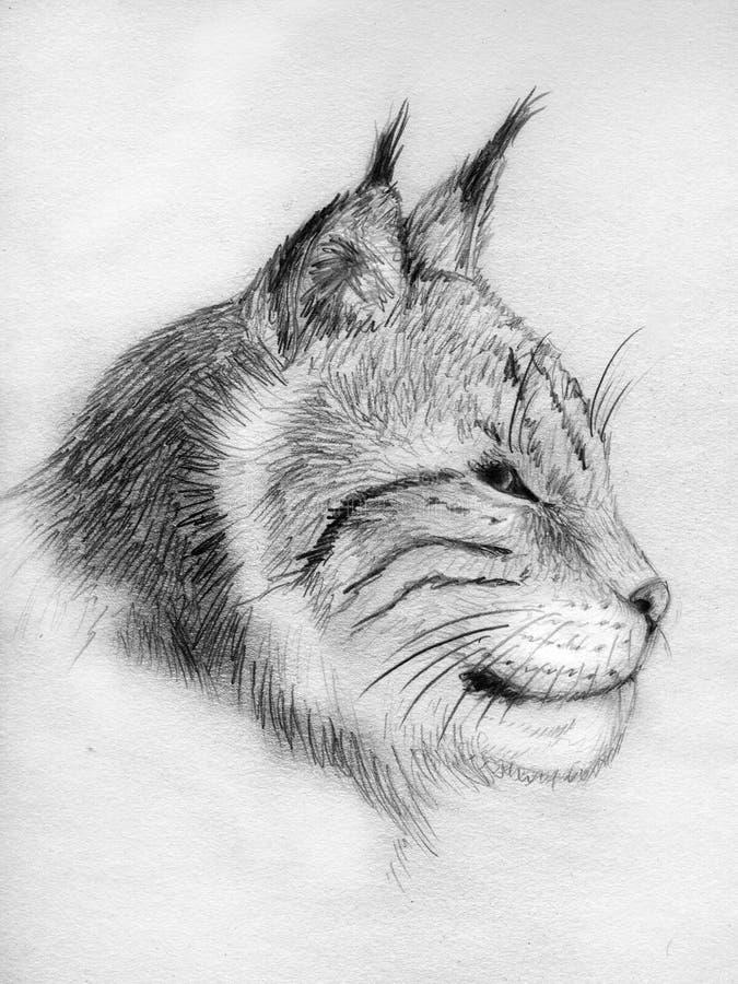 эскиз портрета lynx иллюстрация вектора