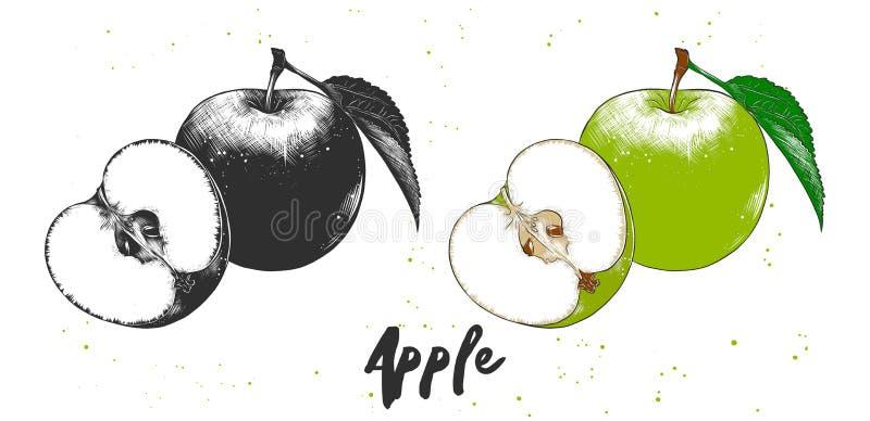 Эскиз руки вычерченный яблока в monochrome и красочном Детальный вегетарианский чертеж еды иллюстрация штока