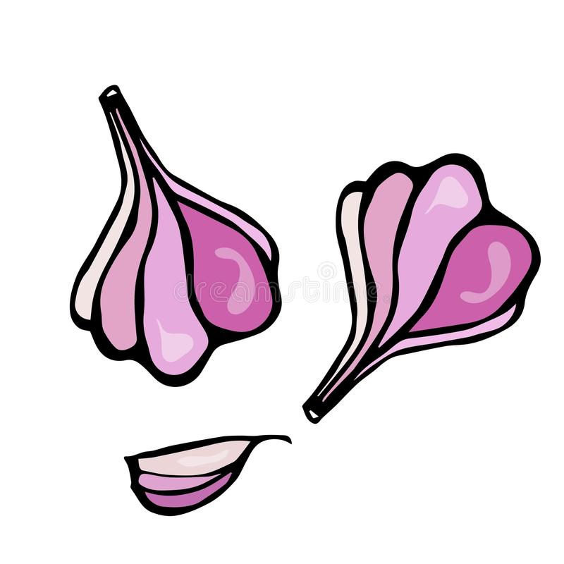 Эскиз трав и специй чеснока и гвоздичного дерева чеснока Иллюстрация вектора еды и специи иллюстрация штока