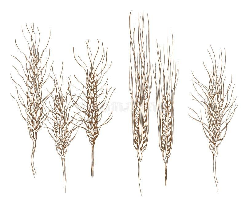 Эскиз хлеба иллюстрация вектора