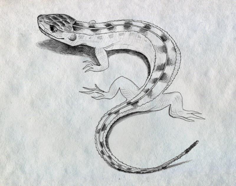 Эскиз ящерицы бесплатная иллюстрация