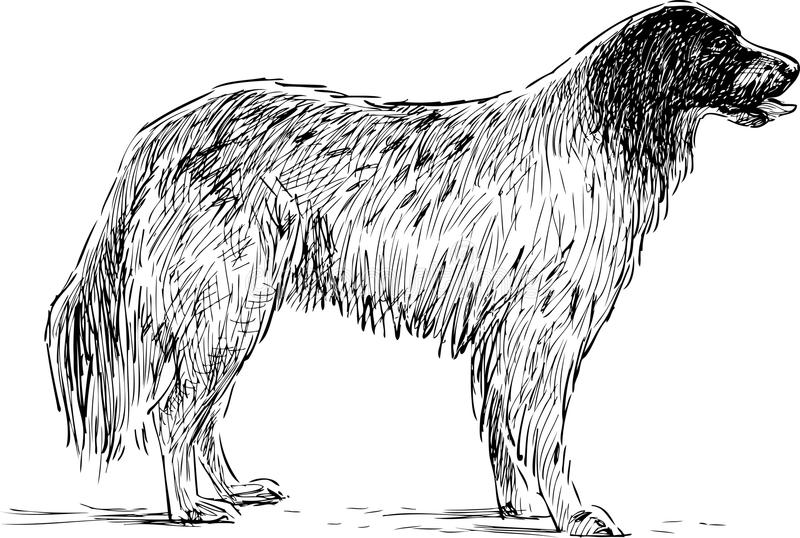 эскиз spaniel иллюстрация штока