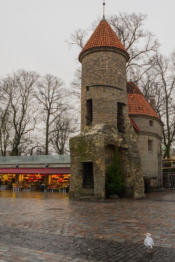 эстония tallinn Известные ворота Viru ориентира в уличном освещении старый городок Популярное touristic место стоковое изображение