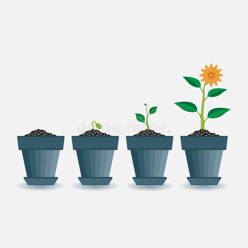 Этапы выращивания растения, расписания завода растя, infographic