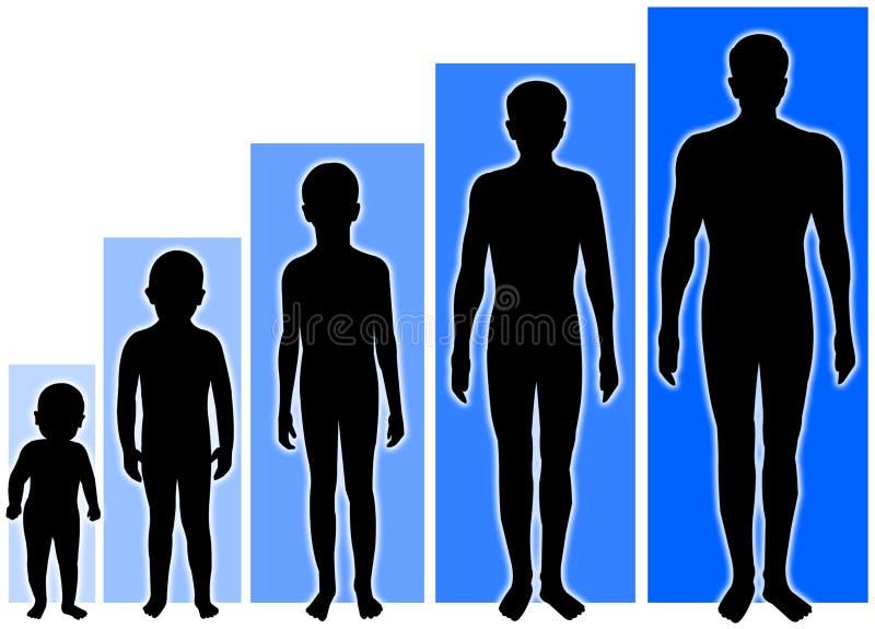 этапы мужчины роста бесплатная иллюстрация