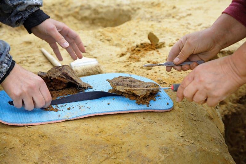 Этап археологических раскопок Извлеченные находки которые все еще в части почвы стоковая фотография rf