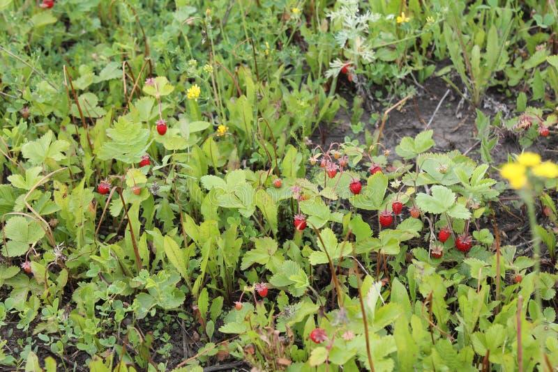 Это вегетация на севере стоковое изображение rf