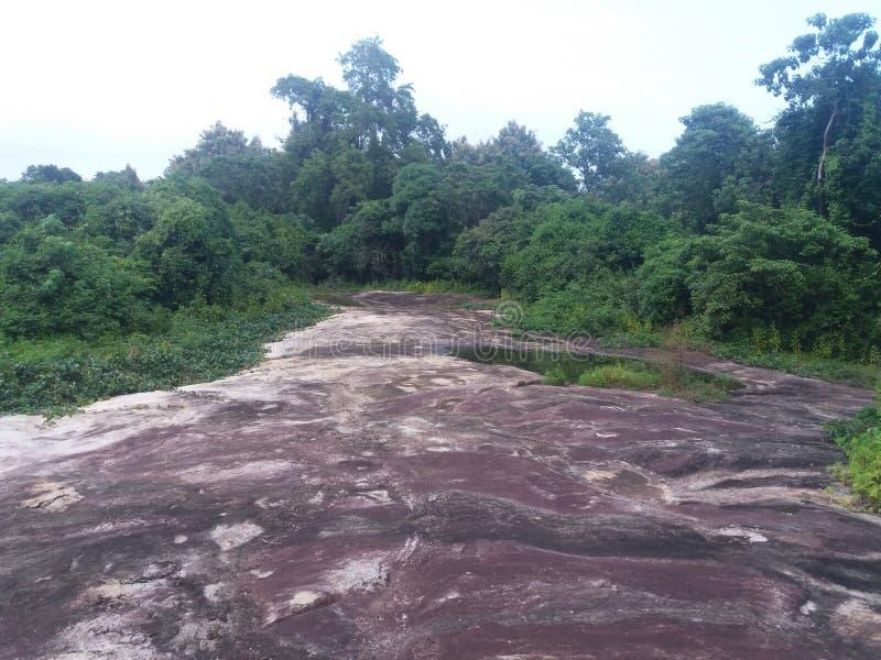 Это вода с джунглями стоковое фото