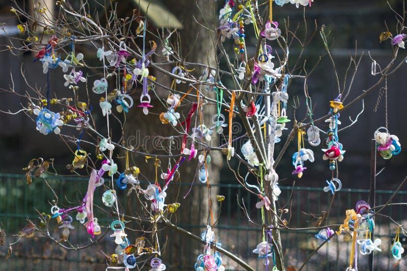 Это красивое изображение n показывает дереву pacifier где младенцы прикрепляют их pacifiers и получают подарок Изображение было стоковые изображения