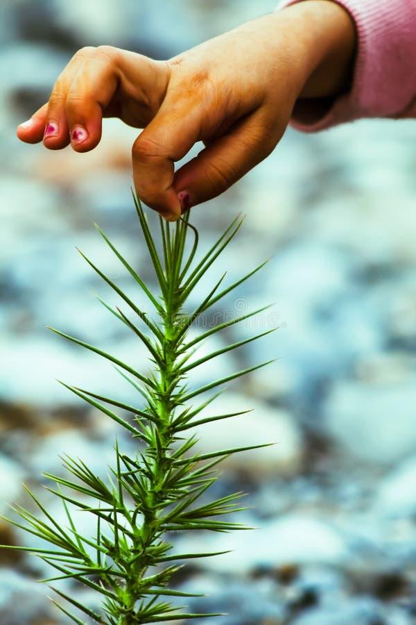 Это опасное растение в дикой природе стоковая фотография rf