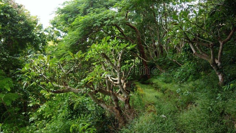 Это часть леса в виске Марии в Vung Tau стоковое изображение
