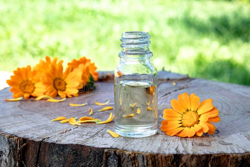 Эфирное масло Calendula около желтых цветков calendula на деревянной предпосылке в природе Выдержка тинктуры calendula стоковые фотографии rf