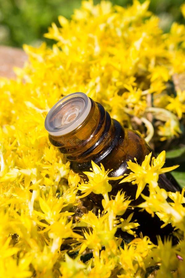 Эфирное масло с желтыми цветками стоковые изображения rf