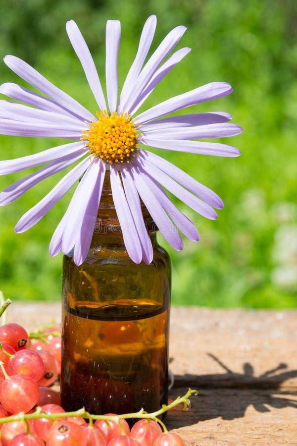эфирное масло с фиолетовой маргариткой стоковое фото rf