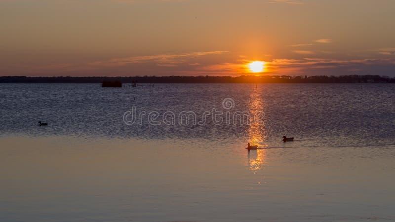 Эффектный заход солнца над озером Massaciuccoli, Лукки, Тосканы, Италии стоковое изображение rf
