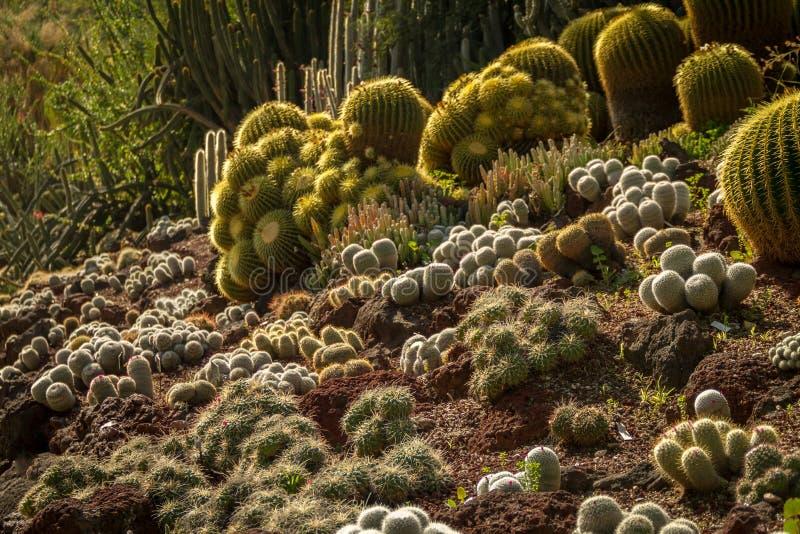Эффектный сад кактуса пустыни при множественные типы кактуса загоренные по солнцу стоковые изображения