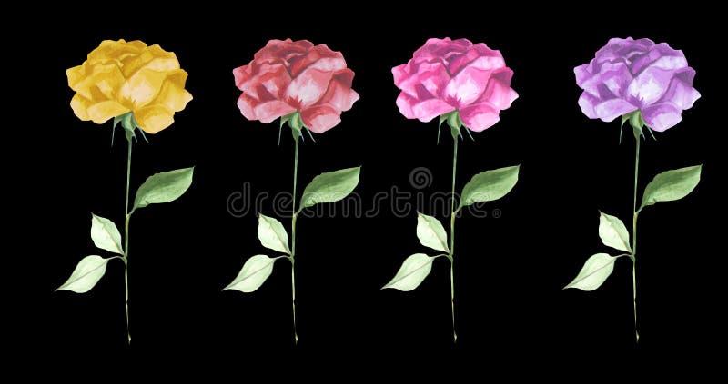 Элегантная акварель роз в ряд роскошная текстурировала искусство цветка иллюстрация штока