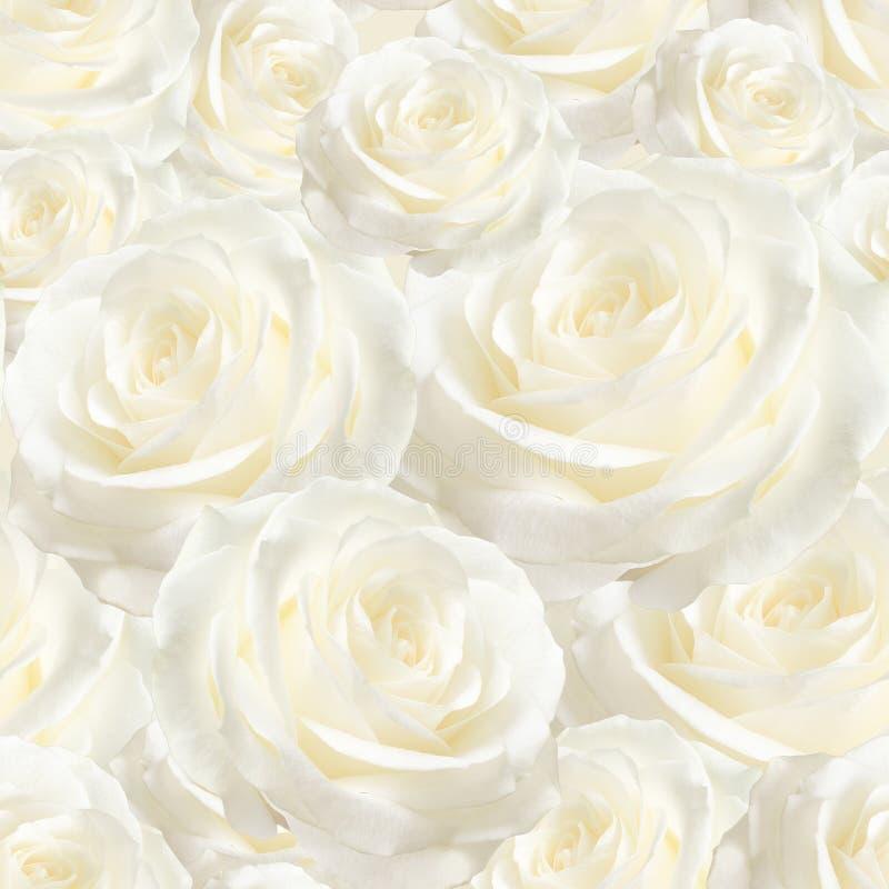 Элегантная белая безшовная картина роскошная подняла стоковая фотография