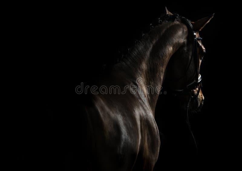 Элегантная лошадь спорта стоковые изображения
