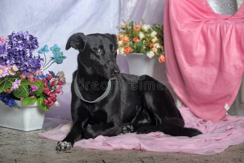 Элегантная черная собака стоковое изображение
