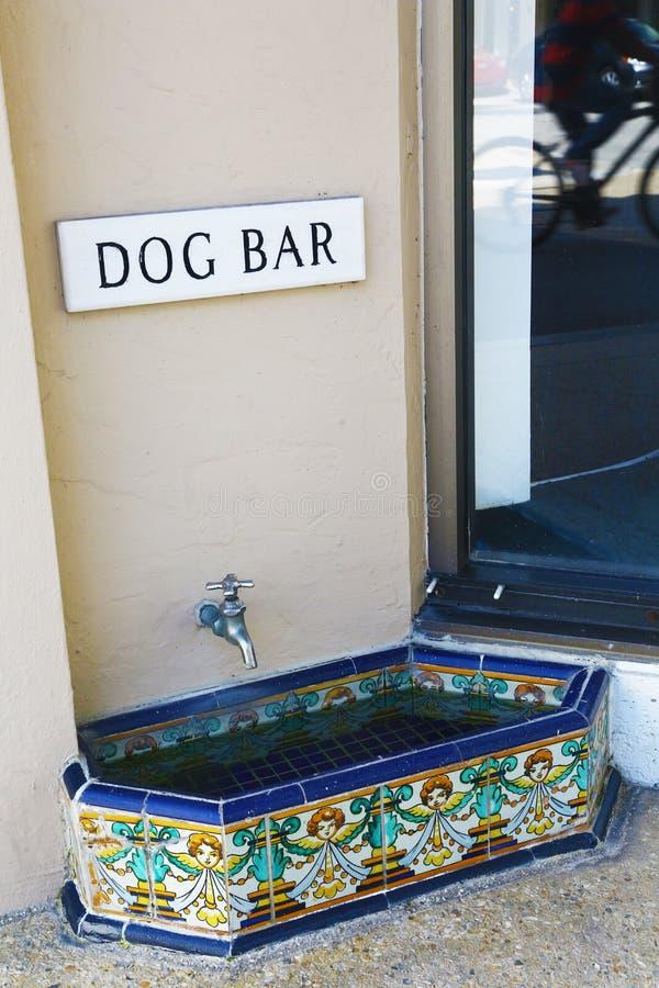 Элегантный выпивая ринв для собак в Palm Beach стоковые фото